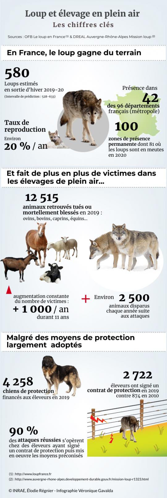 infographie montrant augmentation présence loup