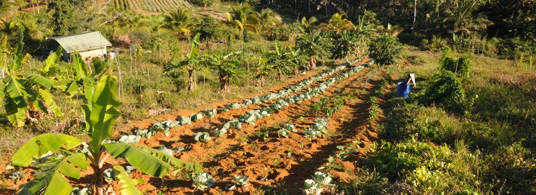 illustration Pour une valorisation des exploitations agricoles de petite échelle bioéconomique et agroécologique