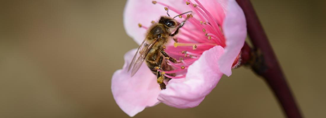 illustration La sécurité alimentaire mondiale impactée par le déficit d'insectes pollinisateurs