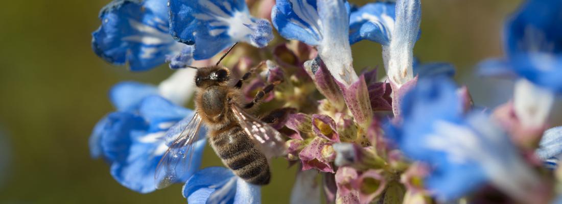 illustration Comment sauver les colonies d'abeilles ?