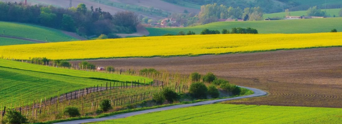illustration Agriculture compétitive et durable : les apports croissants du biocontrôle