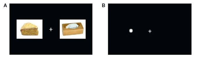 A : image alimentaire appariée à une image neutreB : un point remplace l'une des imagesLes temps de réaction des participants sont plus courts pour détecter le point lorsque celui-ci remplace une image alimentaire, traduisant ainsi un biais attentionnel envers l'aliment © Inra