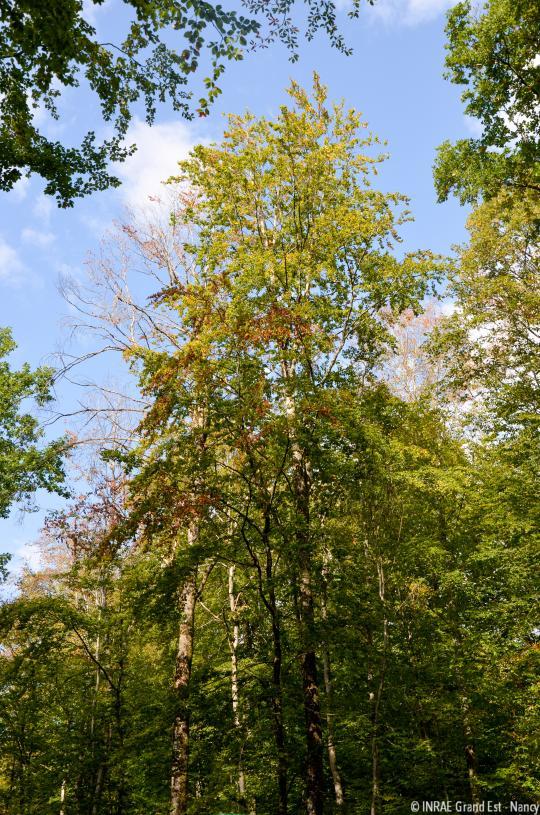Forêt domaniale de Montiers-sur-Saulx