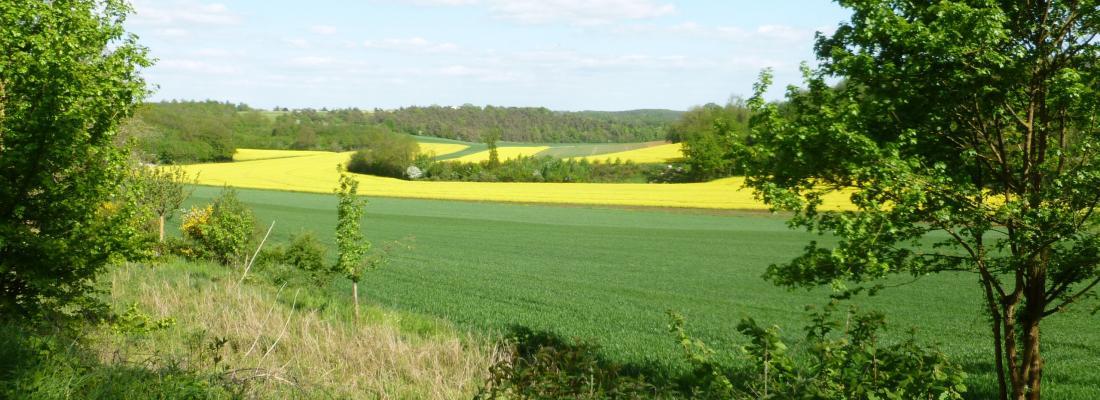 illustration Impact des pesticides et de la structure du paysage sur la prédation des bioagresseurs dans les cultures