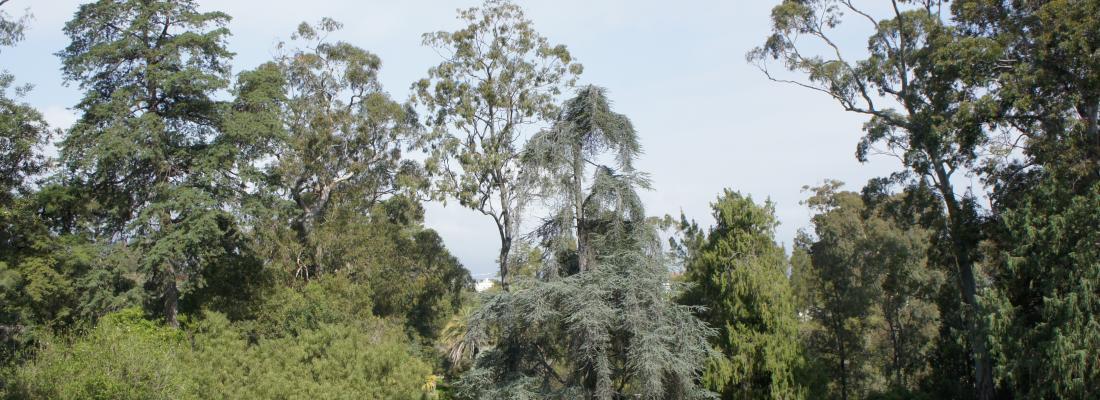 illustration Opération d'haubanage d'arbres emblématiques du jardin Thuret - Des experts scientifiques au service de notre patrimoine vivant