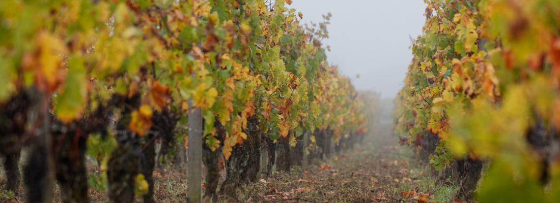 illustration Cultiver la vigne sans pesticides : lancement du projet VITAE