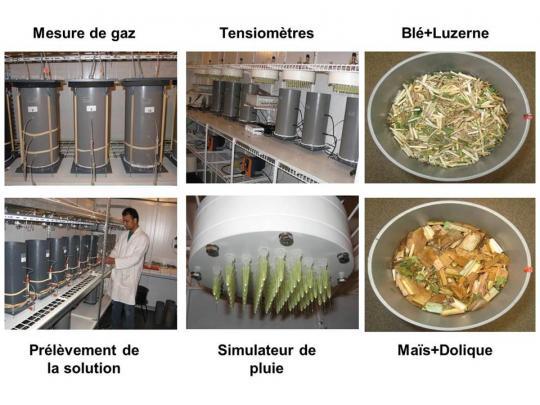 Les échantillons de sols et de mulch sont prélevés dans des colonnes et soumis à des températures contrôlées et à un simulateur de pluies. Les chercheurs mesurent l'évolution de la biomasse végétale du mulch, son humidité, sa teneur en carbone et en azote.