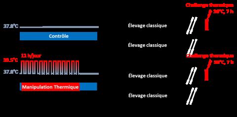 Protocole du challenge thermique