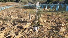 Irrigation localisée enterrée