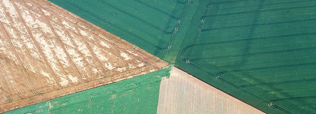 illustration Des mosaïques de cultures plus complexes pour une plus grande biodiversité dans les paysages agricoles