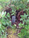 Dispositif de mini-cage pour préserver la plantule des herbivores (rongeurs ou cervidés).