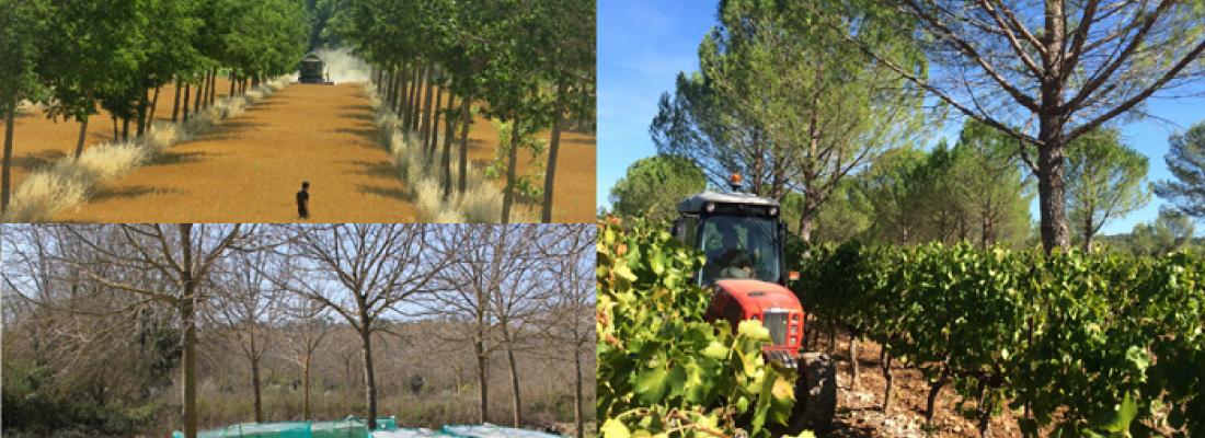 illustration Naissance d'INRAE, nouvel acteur majeur de la recherche et de l'innovation en agriculture, alimentation et environnement