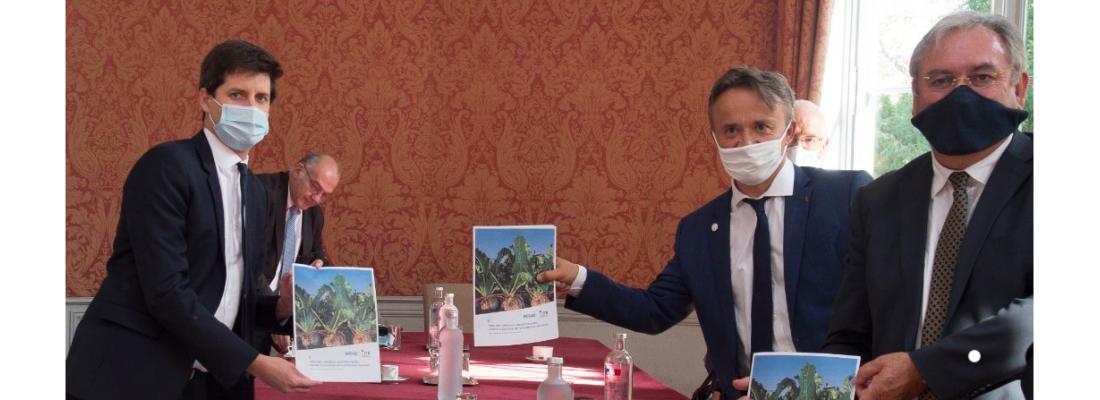 illustration Alternatives opérationnelles aux néonicotinoïdes contre la jaunisse de la betterave sucrière : Plan national de Recherche et Innovation remis au ministre Julien Denormandie