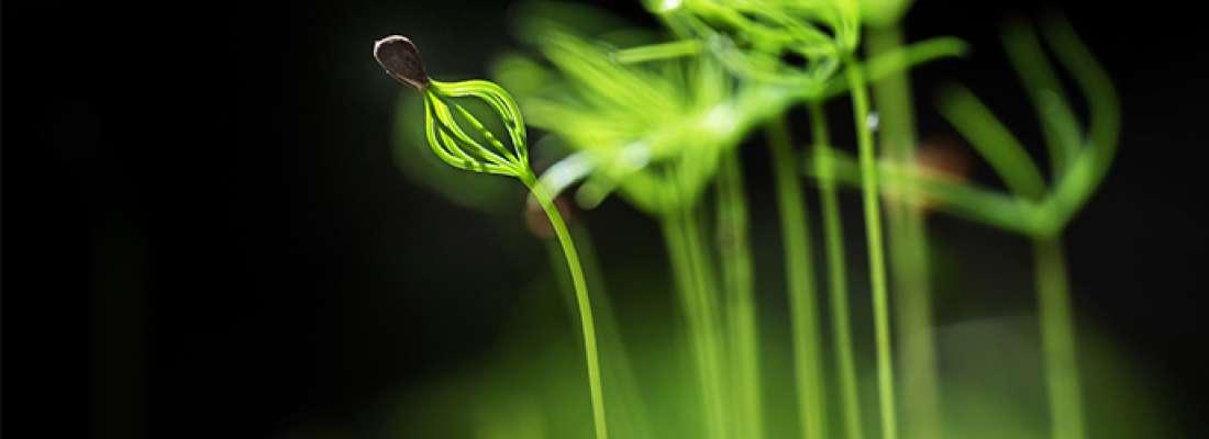 illustration Recherche, innovation et développement en agriculture : quel(s) avenir(s) ?